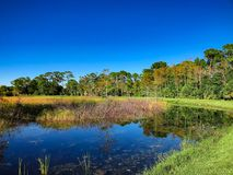 autumn swamp landscape royalty free stock images