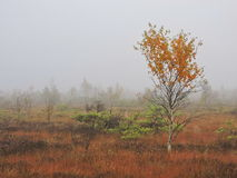 Autumn in swamp, Lithuania Royalty Free Stock Image