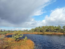 Autumn in swamp, Lithuania Stock Photography