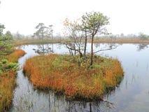 Autumn in swamp, Lithuania Stock Photos