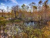 autumn in the swamp stock photography