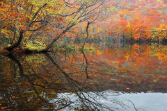 Autumn swamp scenery with beautiful foliage reflected on smooth water. Stock Photo