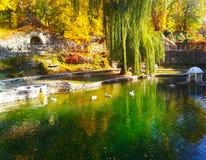 Autumn Swan Lake, kamenets-Podolsky, de Oekraïne stock foto