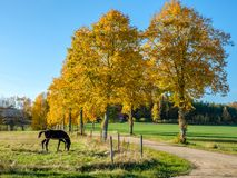 Autumn in Sweden. Autumn in the countryside of Ostergotland, Sweden on a sunny day in October 2017 Royalty Free Stock Photo
