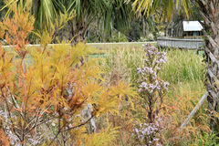 Autumn Sweetwater Wetlands Park Gainesville Florida Royaltyfri Foto