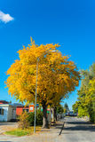 Autumn in swiss alps Royalty Free Stock Photos