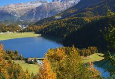 Autumn swiss landscape. Autumn forest on the swiss lake in St Moritz Stock Image