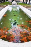 Autumn sycamore leaves in pool Stock Photography