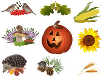 Autumn symbols. It is illustration of autumn symbols Royalty Free Stock Photo