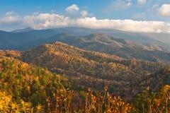 Autumn Taiga Royalty Free Stock Images