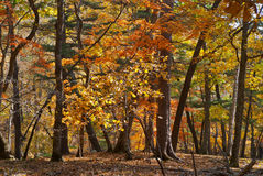 Autumn taiga 20 Royalty Free Stock Photo
