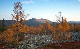 Autumn in Taiga Forest With Mountains on Horizon Stock Images