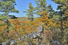 Autumn taiga 29 Royalty Free Stock Image