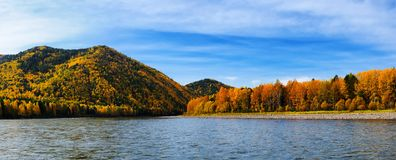 Autumn taiga Stock Image