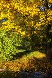 Autumn Tale imagem de stock