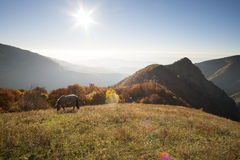 Autumn tale with mountain sunrise and horses Stock Photo