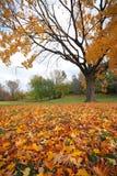 Autumn tales Stock Image