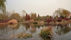 The autumn and Tang autumn colors stock photo