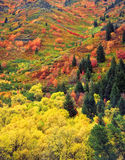 Autumn Tapestry (V). Colorful trees and bushes on a hillside in Logan Canyon, located in the Wasatch-Cache National Forest of Utah photographed during the autumn Stock Photo
