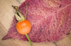 autumn taste, rose hip and leaf Stock Photo