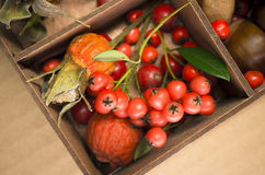autumn taste, rose hips, chestnuts and red berries Stock Image