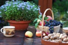 Autumn tea Stock Images