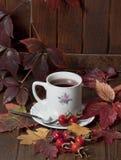 Autumn tea Royalty Free Stock Image
