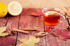 Autumn Tea Foto de archivo