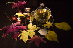 Autumn Tea royaltyfria bilder