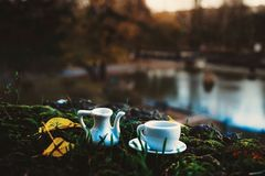 Autumn. Tea in the macro Stock Photos