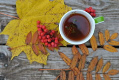 Autumn tea. Mug of tea, autumn leaves and rowanberry on a old green wood background Stock Images