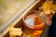 Autumn tea Stock Image