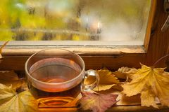 Autumn tea Royalty Free Stock Images