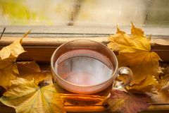 Autumn tea Royalty Free Stock Photography