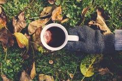 Autumn teacup Royalty Free Stock Photography
