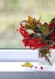 Autumn tears Stock Photo