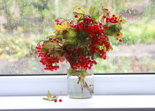 Autumn tears. Beautiful still-life with viburnum branches in jar at a window royalty free stock photos