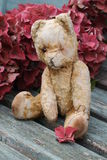 Autumn Ted Imagen de archivo