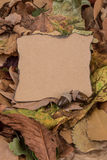 Autumn template with dried leafs Stock Photography