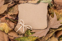 Autumn template with dried leafs Stock Photo