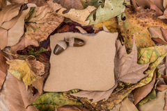 Autumn template with dried leafs Royalty Free Stock Image