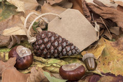 Autumn template with some acorns and dried leaves Royalty Free Stock Image