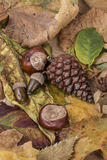Autumn template with some acorns and dried leaves. Autumn template with colorful acorns and dried leaves royalty free stock photos