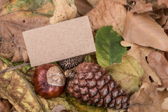 Autumn template with some acorns and dried leaves. Autumn template with colorful acorns and dried leaves Stock Photography