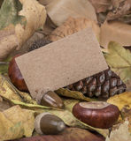 Autumn template with some acorns and dried leaves. Autumn template with colorful acorns and dried leaves Royalty Free Stock Photography