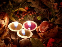 Autumn tendency Stock Photos
