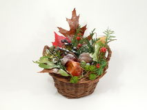 Autumn tendency Stock Images