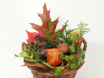 Autumn tendency Stock Image