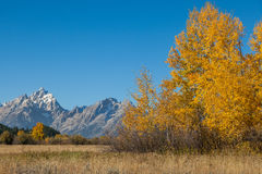Autumn in the Tetons Royalty Free Stock Images