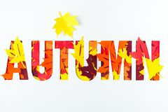 Autumn text with paper cut maple leaves. Top view Royalty Free Stock Photo